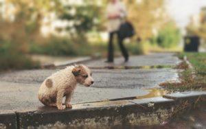 Признание прав на бесхозных животных