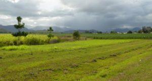 Земля в государственной собственности