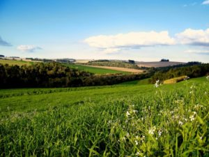 Земля в муниципальной собственности