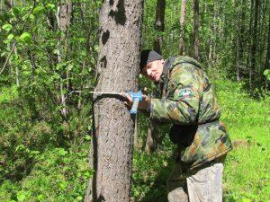 Лесные угодья находятся в государственной соственности