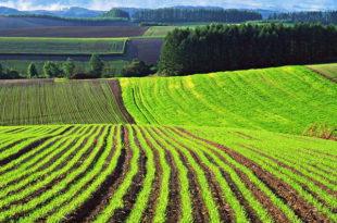 Земли сельскохозяйственого назначения